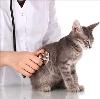 Ветеринарные клиники в Суре
